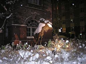 Photo: 4B221560 Finlandia - Helsinki - renifer pod sniegiem