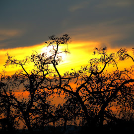Tree by sunset by Gil Reis - Nature Up Close Trees & Bushes ( places, nature, portugal, bio, trees, life )