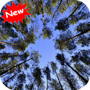 Free Forest APK for Windows 8