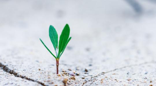 Portada Estrategia de crecimiento