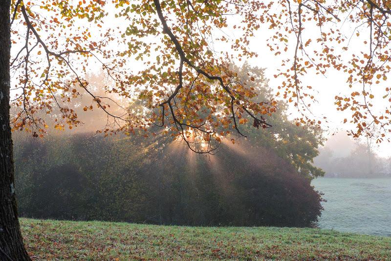 Le ultime foglie di Peter_Sossi