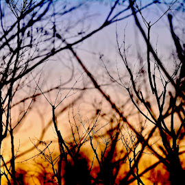 Daybreak in Kanab. by Victoria Eversole - Nature Up Close Trees & Bushes ( sunrise )