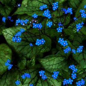 Stars into the Garden by Mikhail Romanovski - Flowers Flower Gardens (  )