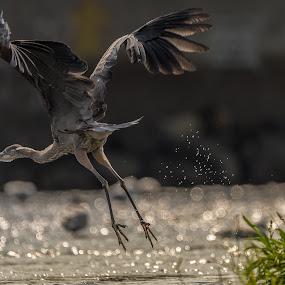 by Mario Guay - Animals Birds