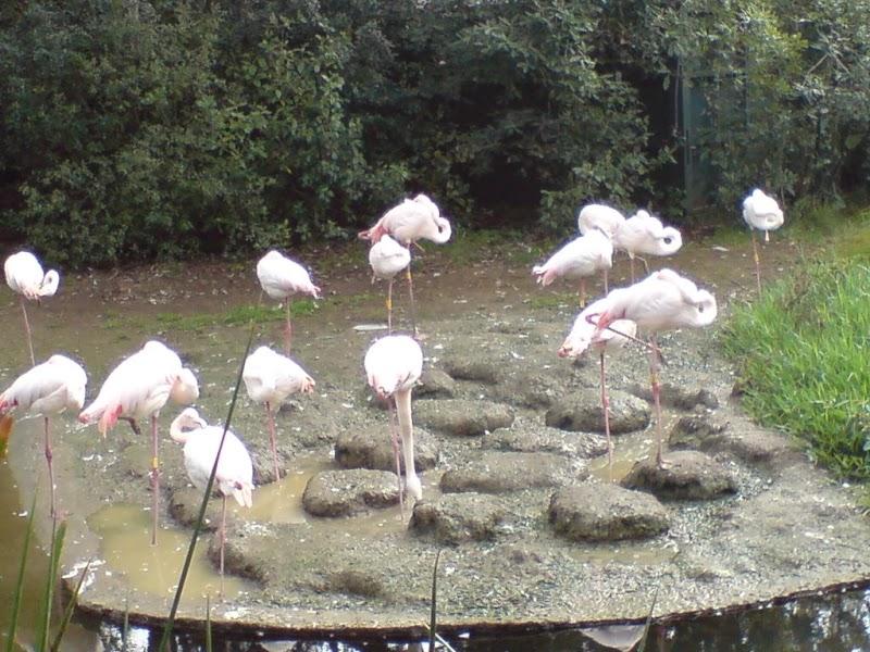 Auckland Zoo 2007