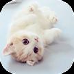 Cat Theme – AppLock APK