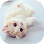 Cat Theme – AppLock Icon