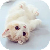 Cat Theme – AppLock