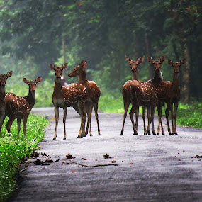 Group on the Forest Road by Asim Mandal - Animals Other Mammals