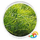 Grass Real Live Wallpaper icon