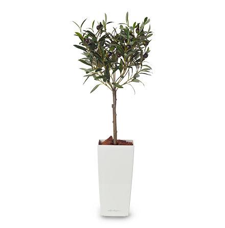 Konstväxt oliv 65cm