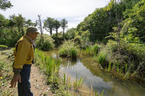 たくさんの虫達が共存する池も武市さん手作り