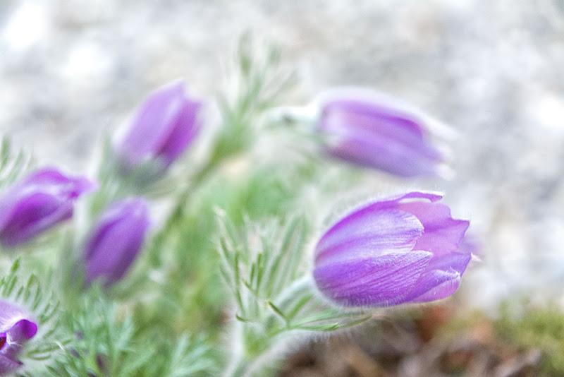 Il colore viola.. di vaiolet