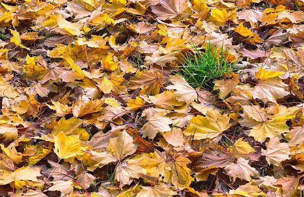 Tra le foglie morte  di FZATOX