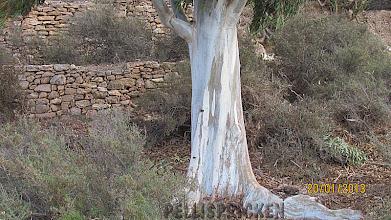 Photo: Stenlagda murar runt hela fastigheten och titta på Stammen. Är den inte vacker så säg