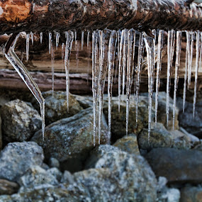 Frozen Water by Kim Wilson - Nature Up Close Water ( water, frigid, exterior, icicles, frozen, landscape, log, pwcfoulweather-dq, winter, cold, horizontal, outdoors, day, rocks, closeup, outside )