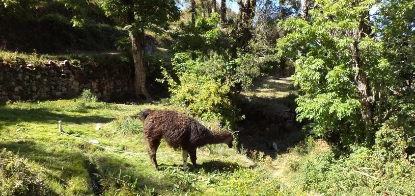 fauna | TOUR ISLA DEL SOL