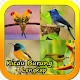 Kicau Burung Lengkap Download for PC Windows 10/8/7