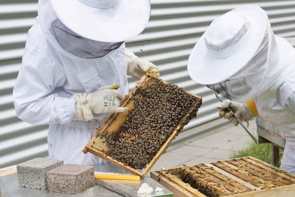 Подготовка партии мёда к экспорту
