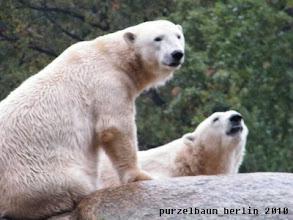 Photo: Tosca und Nancy jetzt auch ;-)