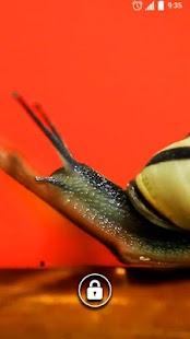 Snail background Live Wallpape - náhled