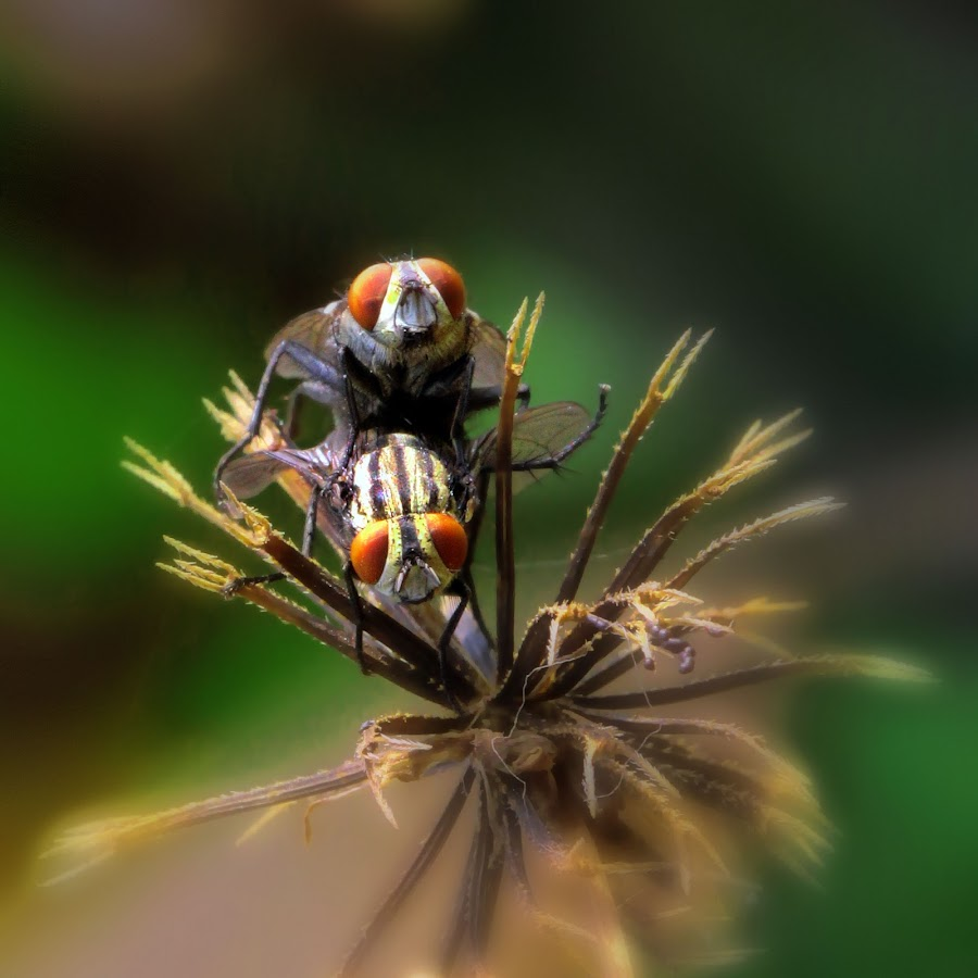by Iwan Phang - Animals Insects & Spiders