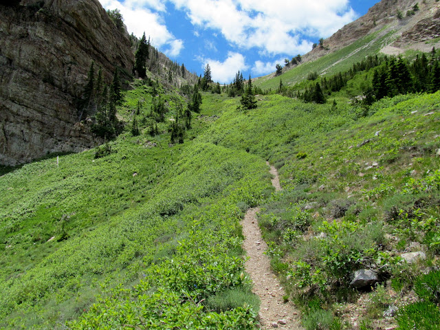 Beautiful stretch of trail at the top of Pocket's Fork