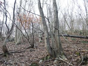 自然林の斜面を登る