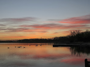 Photo: Priorslee Lake The morning's sunrise: you can see the 7 Canada Geese unmolested by the sleeping adult Swans and 2 only alert cygnets. (Ed Wilson)