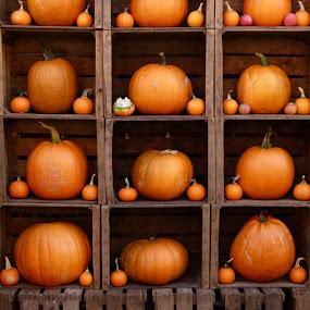 """Pumpkins"" by Peter Wabbel - Public Holidays Halloween ( herbst, calabazas, kürbisse, pumpkin, autumn, pwcpumpkins, otoño, pwcstilllife, pumpkins, halloween )"