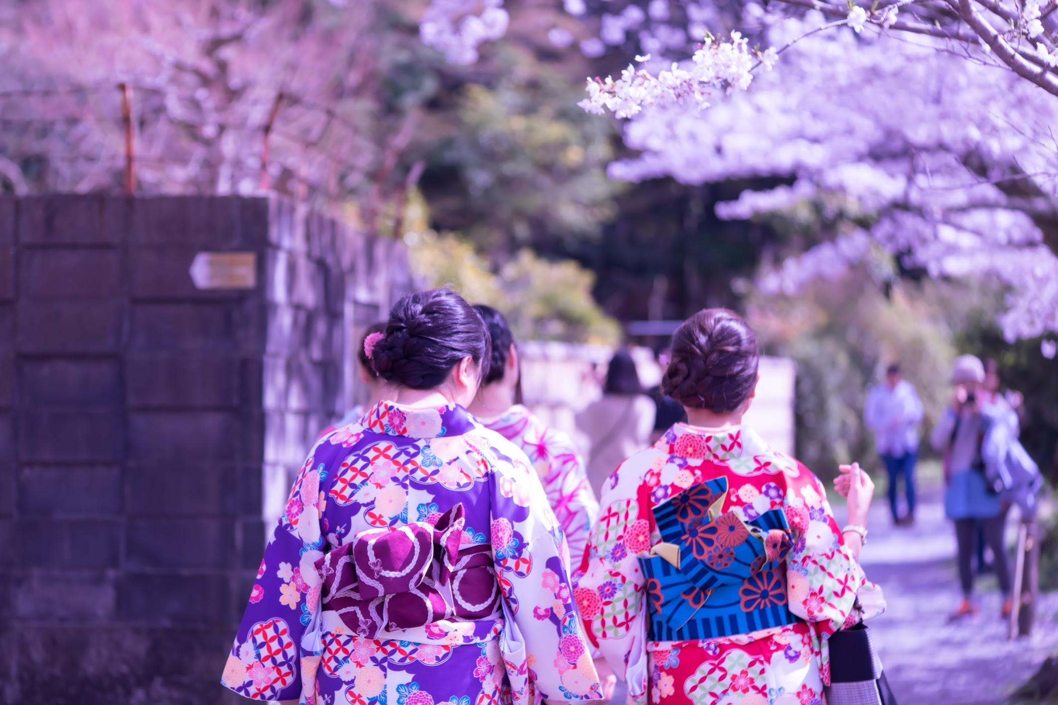 京都 桜 哲学の道2