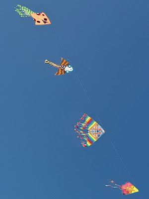 il volo colorato... di Francesco Di Maio