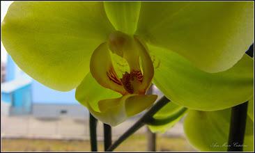 Photo: Orhidee la care astazi a inflorit al 4-lea boboc - 2018.02.22
