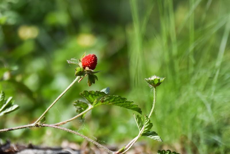 nel bosco di maggio di laura62