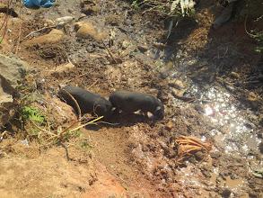 Photo: piglets