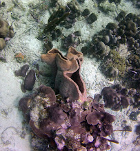 Photo: Sponge. It was pushing my snorkelling limits to get this one at approximately 10 m depth.
