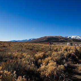 Field of Nevada by Surentharan Murthi - Landscapes Prairies, Meadows & Fields ( field, u.s.a, mountain, sky, desert, nature, blue, nevada, meadow, landscape, dessert )