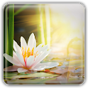 Lotus Wallpapers icon