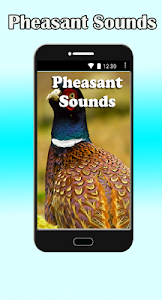 Pheasant Sounds screenshot 0