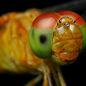 Another smile !!!! by Pacu Jue - Animals Insects & Spiders