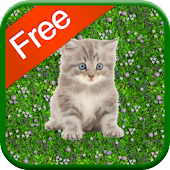 Kitten Games for Girls - Free