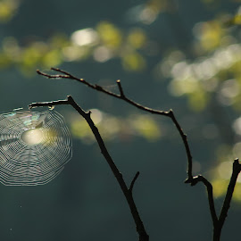 Pavučina by Jarka Hk - Nature Up Close Other Natural Objects ( macro, nature, color, spiderweb, branch )