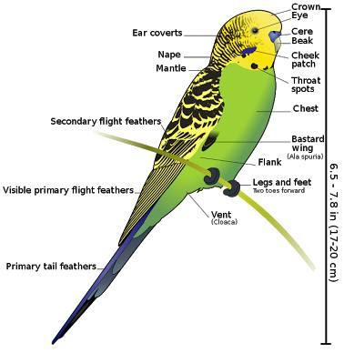 Bird Size