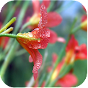 Marvelous Nature Live Images icon