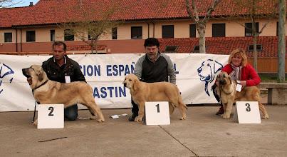 Photo: Ring ganadoras muy cachorros hembras - Dalila de Bao la Madera MB 2ª y Priscila de Bao la Madera MB 3ª