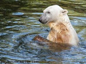 Photo: Ab ins Wasser mit dem Holzteil ;-)