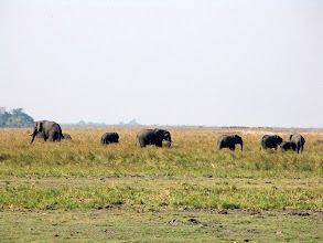 Photo: Chobe National Park, Riverfront - elephants