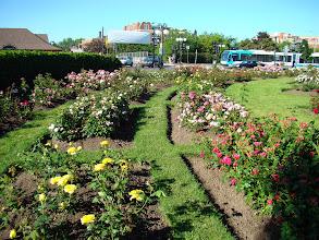 Photo: Jardin de Ville Mont-Royal