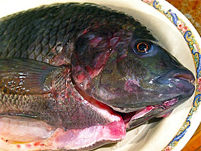 Photo: close-up of very fresh. clear-bulgy-eyed tilapia