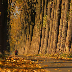 golden hour by Hilda van der Lee - City,  Street & Park  City Parks ( autumn, woman, trees, sunlight, golden hour,  )